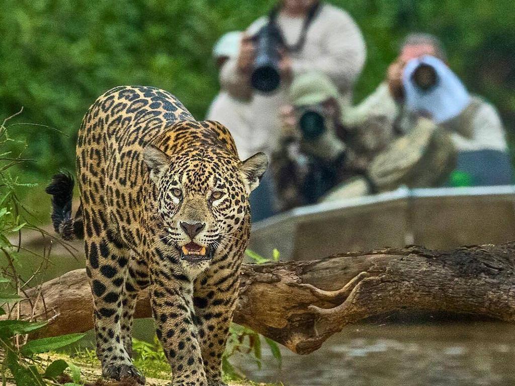 Araras U0026 Jaguar Express 5 Dias / 4 Noites