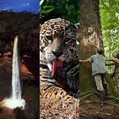 Pacotes Combinados - Amazônia, Cerrado e Pantanal