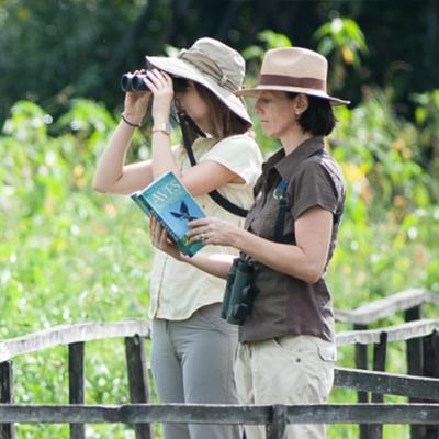 Observação de aves e animais silvestres
