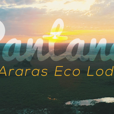 Come visit the Pantanal!
