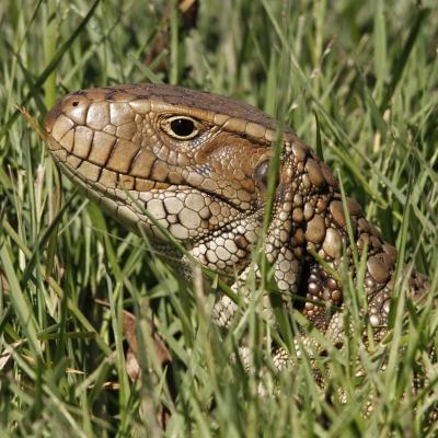Fauna no Pantanal