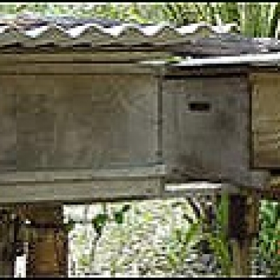 Apiculture and honey production