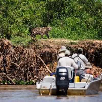 Baiazinha Lodge and Araras Eco Lodge - Jaguar Safari 7 days / 6 nights